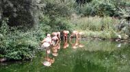 Grugapark7Sept1345.jpg